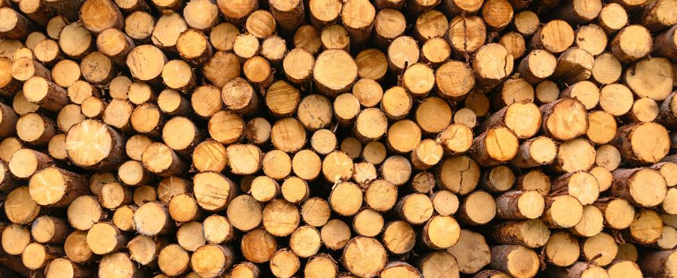 EUTR Holzhandelsverordnung der Europäischen Union