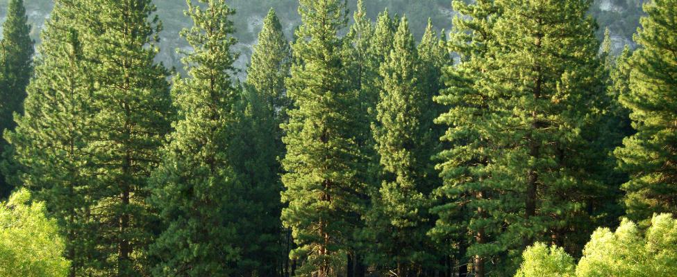 PEFC Zertifizierung der Holzlieferkette