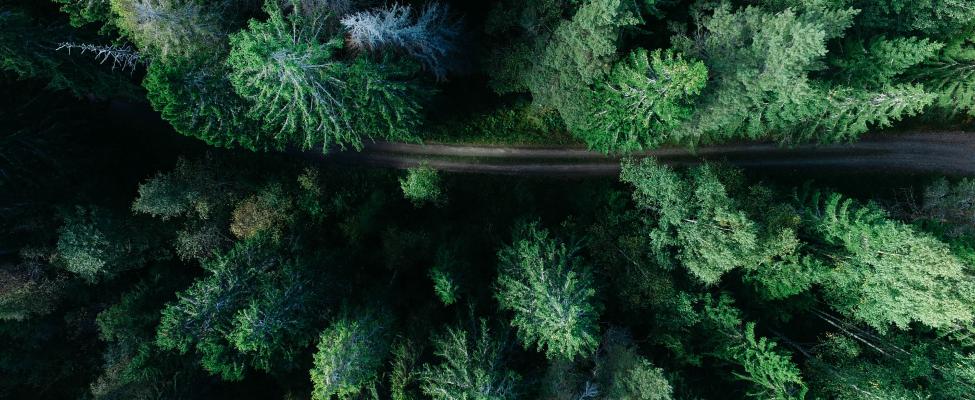 PEFC-Zertifizierung für Waldbewirtschaftung