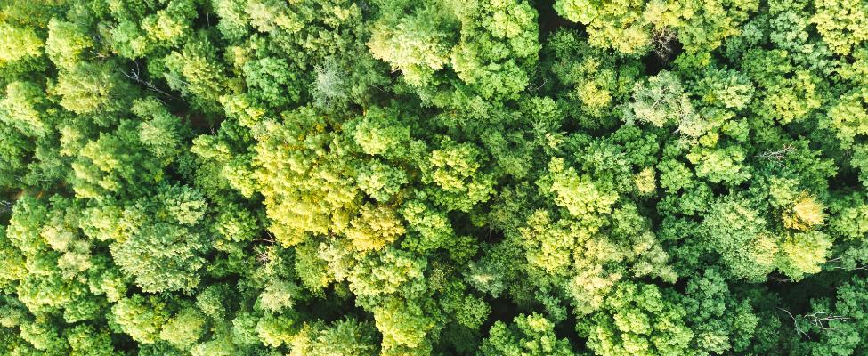 FSC® FM oder PEFC FM Zertifizierung für Waldbesitzer ab 2021 besonders attraktiv