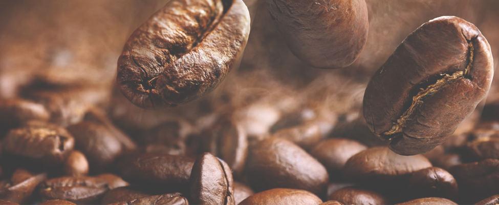 Zertifizierungen für Kakao & Kaffee  –  UTZ und Rainforest Alliance